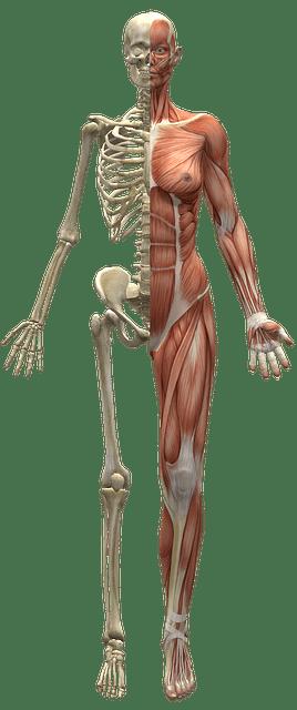 Kalcium i människoskelettet