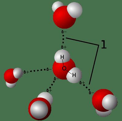 Illustration av vätebindning mellan vattenmolekyler